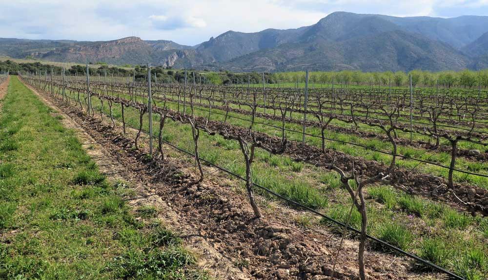 viticultura sostenible