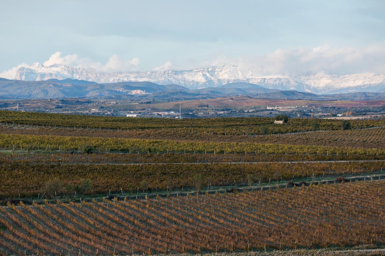 ¿Cómo afecta el cambio climático al viñedo?