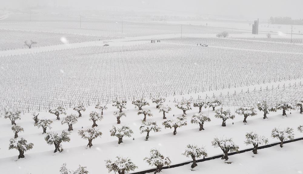 Tratamiento del viñedo en invierno